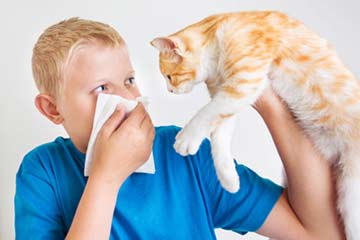 Alergia a las mascotas y su tratamiento